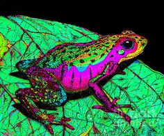 A rainbow colored frog on a leaf.  Visit our newest pet frog video here:  https://youtu.be/ilMY41o9s7I  #frog #frogs #petfrog #petfrogs #whatdofrogseat