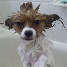 Bath time! - This little guy looks like a Star Wars character.