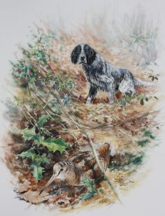 Dominique Pizon Grouse Hunting, Pheasant Hunting, Hunting Art, Hunting Dogs, German Shorthaired Pointer, Irish Setter, Black Labs, Wildlife Art, Dog Art
