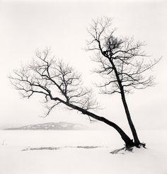 Tree - Michael Kenna