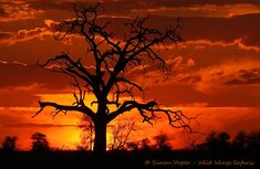 Wild Wings Safari offers unforgettable scheduled Kruger Park Safaris: 4 or - or you can custom your own. Expert, knowledgeable guides, open safari vehicles, overnight in Kruger itself for a real African safari experience. Dawn And Dusk, African Safari, Sunsets, Silhouettes, Fire, In This Moment, Orange, Outdoor, Outdoors