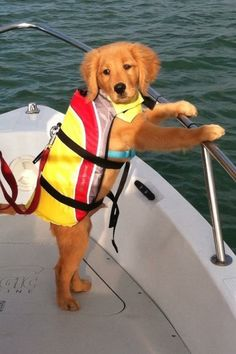 This little guy is totally water safe! Remember, life jackets are for everyone, big or small! Especially on open water.