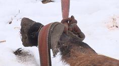 Ľudská bezcitnosť nepozná hranice. Reportáž nie je nevhodná pre slabšie povahy! Monitor, Horses, Animals, Animales, Animaux, Animal, Animais, Horse