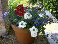 Red white blue creating outdoors pinterest red white blue red white and blue flowers mightylinksfo