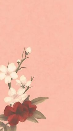 Shawn Mendes - Lost in Japan Shawn Mendes Album, Shawn Mendes Cute, Shawn Mendes Lockscreen, Shawn Mendes Wallpaper, Aesthetic Pastel Wallpaper, Aesthetic Wallpapers, Flower Backgrounds, Wallpaper Backgrounds, Wallpaper Iphone Disney