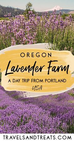 Day trip from Portland to Hood River Lavender Farm. Things to do in Portland, Oregon in the summer. There are a number of beautiful lavender farms in Oregon. Take an easy day trip from Portland, Oregon to Hood River Lavender Farms. Oregon Vacation, Oregon Road Trip, Oregon Trail, Oregon Coast Roadtrip, Hiking In Portland Oregon, Travel Portland, Oregon Camping, Visit Portland, Road Trip Map