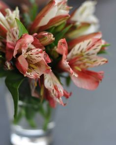 How to grow and care for Alstroemeria, also known as Peruvian Lily, in your home as cutflowers or as bedding or container plant in your garden. Flowers Name List, Peruvian Lilies, Inca, Container Plants, Garden, Floral, Bedding, Instagram, Fantasy
