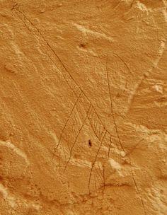 L'incisione della giraffa (Archaeological Mission in the Farafra Oasis)