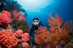 The Best Raja Ampat Liveaboards Great Barrier Reef, Perfect Image, Perfect Photo, Love Photos, Cool Pictures, Black Tip Shark, Reef Shark, Whale Sharks, Calico Jack
