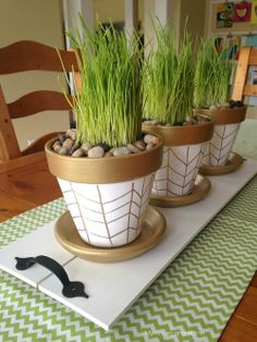 Spring pots with a touch of gold and planted with wheat grass- My House and Home