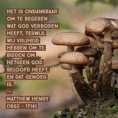 Verboden begeren ondankbaar, want vrijheid tot het beloofde is genoeg - Matthew Henry (1662 - 1714)
