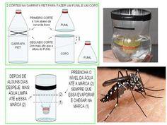 Armadilha para insetos