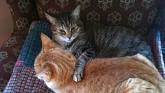 Why In-Home Euthanasia Was the Right Choice For Us and Our Cat
