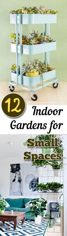 Indoor Gardening, In