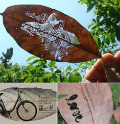 Leaf Business Card. Your message or logo etched right onto a real leaf, no paint necessary! The resulting leaves are simple, stunning when looked at against the sunlight, and the best part is that if they are thrown away, there is no adverse effect on the environment.