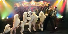 $10 -- Circus Act with Poodles, Acrobatics & Juggling