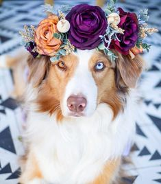 Flower Crown Cat Dog This Artist Makes Animals Look Like Fairytale Characters By Creating Beautiful Flower Crowns The post Flower Crown Cat Dog appeared first on Easy flowers. Cute Funny Animals, Cute Baby Animals, Animals And Pets, Beautiful Dogs, Animals Beautiful, Majestic Animals, Cute Dogs And Puppies, Doggies, Big Dogs