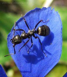 Beautiful image of an ant macro.