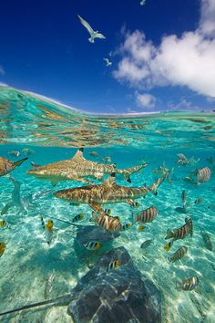Bora Bora lagoon, Tahiti, French Polynesia.by Chris Mclennan. http://beyondf8.com/view-from-downunder/