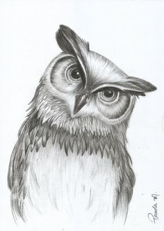Unique drawings, drawings of owls, animal drawings, animal sketches, pencil drawi Pencil Drawings Of Animals, Animal Sketches, Bird Drawings, Bird Pencil Drawing, Realistic Drawings Of Animals, Unique Drawings, Cool Art Drawings, Art Drawings Sketches, Cute Owl Drawing
