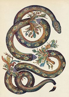 By Katie Scott #snake #illustration