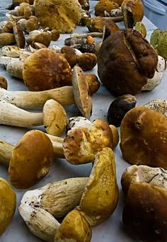 How to gather and use Alaska's wild mushrooms.