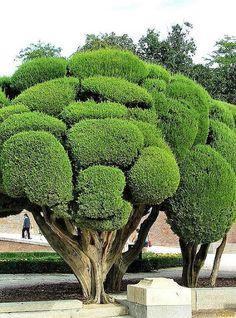 Parasole drzew