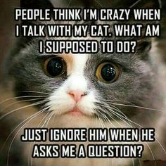 Exactly! =^..^= www.kittyprettygifts.com #cats #cute #lolcats #memes #kitty #humor #kittyprettygifts