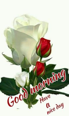 Everybody keeps searching for good morning images with beautiful flowers wish their friends good morning. In today's post, we have brought you a great collection of good morning images with beautiful flowers. Good Morning Roses, Good Morning My Friend, Good Morning Greetings, Good Morning Good Night, Good Morning Messages, Good Morning Beautiful Images, Good Morning Images Hd, Morning Pictures, Good Night Gif