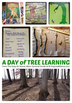 Fun Tree Themed Nature Activities for Kids - simple and easy - perfect for homeschooling