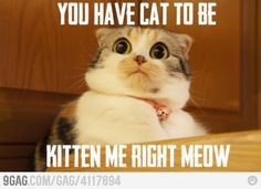 Are you kitten me ?