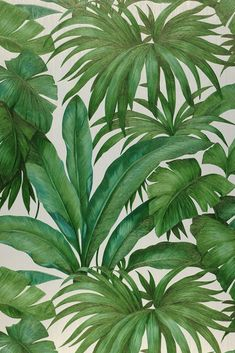 This exclusive Versace design wallpaper turns any room of your home into a tropical palm garden. It's incredibly realistic, inviting us to touch th. Palm Wallpaper, Wallpaper Samples, Pattern Wallpaper, Green Wallpaper, Plant Painting, Plant Art, Tropical Leaves, Tropical Plants, Motif Jungle