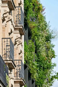 Parisian, Multi Story Building, Mansions, House Styles, City, Gallery, Green, Vertical Gardens, Climbers