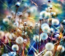 Inspiring picture colorful, daisy, fluffly, photography, pretty. Resolution: 544x544 px. Find the picture to your taste!