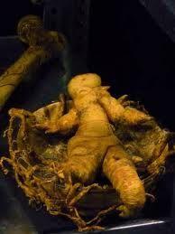 La mandrágora fue usada extensamente en Europa medicinalmente. Sus raíces han sido usadas durante la historia en rituales mágicos, ya que sus bifurcaciones tienen cierto parecido a una figura humana; incluso hoy en día se usa en religiones neopaganas, como la Wicca.