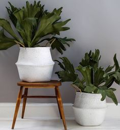 White Seagrass basket in a choice of two sizes.These baskets are in a white painted seagrass. They would be equally great for holding indoor plants, storing scarves or toys at home as for packing up all your goodies in for a picnic as they have very handy handles.They would also make a lovely present - who doesn't love some stylish storage? seagrassLarge: Folded: H: 20 x Dia: 38cm Full Hight: H33 x D30cm Small: Folded: H:18 x Dia:32cm Full Hight: H30 x D25cm