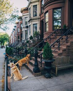 South Slope Brooklyn