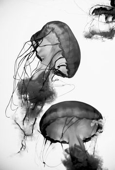 jellyfish | #black + #white