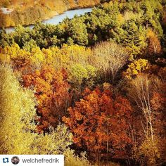 #Repost @welchefredrik with @repostapp Get featured by tagging your post with #talestreet True Colors Autumns Here #travel #traveler #travelworld #travelous #travelislife #TravelAwesome #traveltheworld #autumncolors #autumn #colours #trees #nature #wander #wanderer #wanderlust #explore #exploretheworld #explorer #exploreearth #twitter