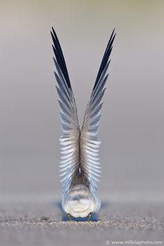 ideas bird wings photography amazing photos for 2019 Love Birds, Beautiful Birds, Animals Beautiful, Cute Animals, Photo Chat, Bird Wings, Angel Wings, Mundo Animal, Foto Art