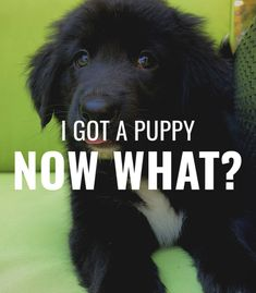 Did you just get a puppy but are confused on what to do next? Does your puppy bite too much and you want to train it to stop on command? What do you even feed a puppy?! So many questions answered in my newest blog post which is a guide to raising a puppy 🐶 Kong Toys, Puppy Biting, So Many Questions, Getting A Puppy, Training Tips, Woodworking Shop, Confused, Raising, Doggies