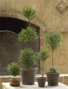 Topiary love!