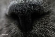 photo macro nez du chat