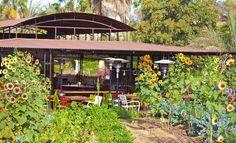 San Jose del Cabo, Mexico | ... Kitchen Restaurant Reviews, San Jose del Cabo, Mexico - TripAdvisor