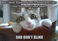 don't blink! ~Doctor Who