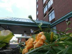Hotel Garden. - Quality Hotel Hamilton 905-578-1212 - Hotel, Travel, Tourism, HamOnt, Hamilton, Ontario, Accommodations, Stoney Creek,