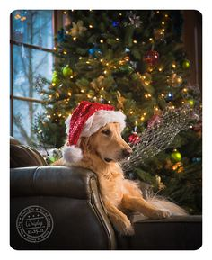 Wrigley rings in Christmas in Issaquah | Issaquah Pet Photography