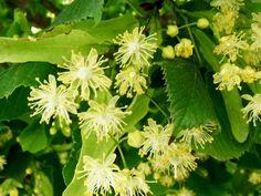 Health Advice, Herbs, Garden, Plants, Pictures, Garten, Lawn And Garden, Herb, Gardens