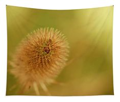 Teasel in the morning light Tapestry x by Helen Kelly. Our premium tapestries are available in three different sizes and feature incredible artwork on the top surface. Chris Cornell Thank You, Basic Colors, All The Colors, Wall Tapestries, Tapestry, My Favourite Subject, Morning Light, Wall Spaces, How To Be Outgoing