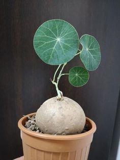 Fleurs Diy, Grow Tent, Thing 1, Heat Pack, Diy Décoration, Grow Lights, Live Plants, Growing Plants, Landscaping